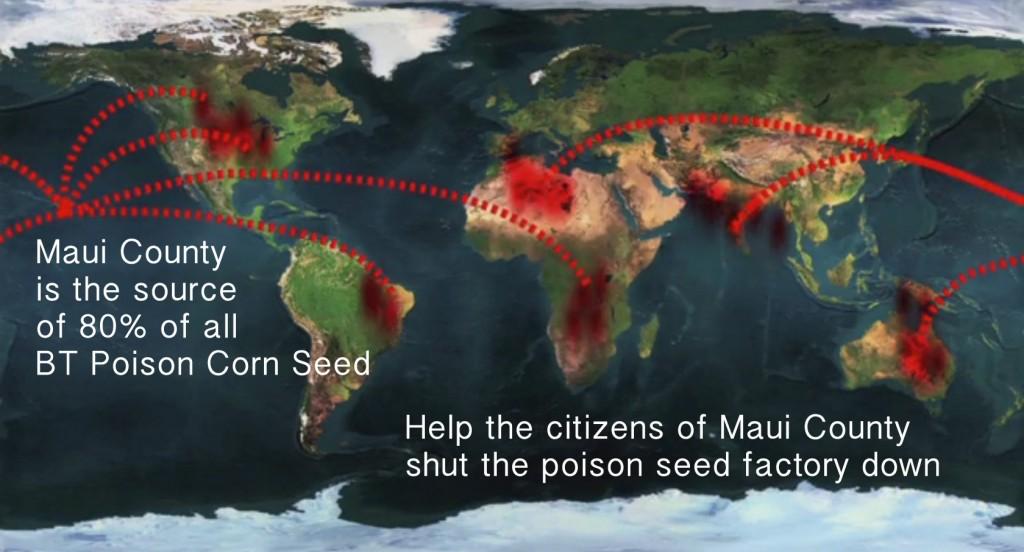 maui seed2